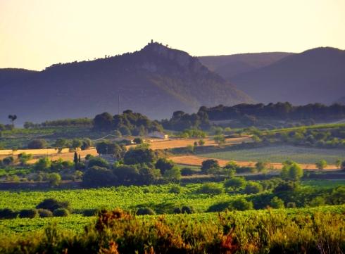 Vinyes_del_Penedes,_Castellví_de_la_Marca.